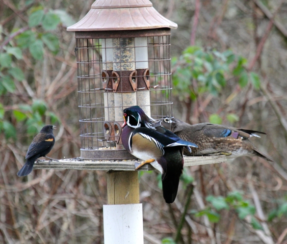 diy wood duck