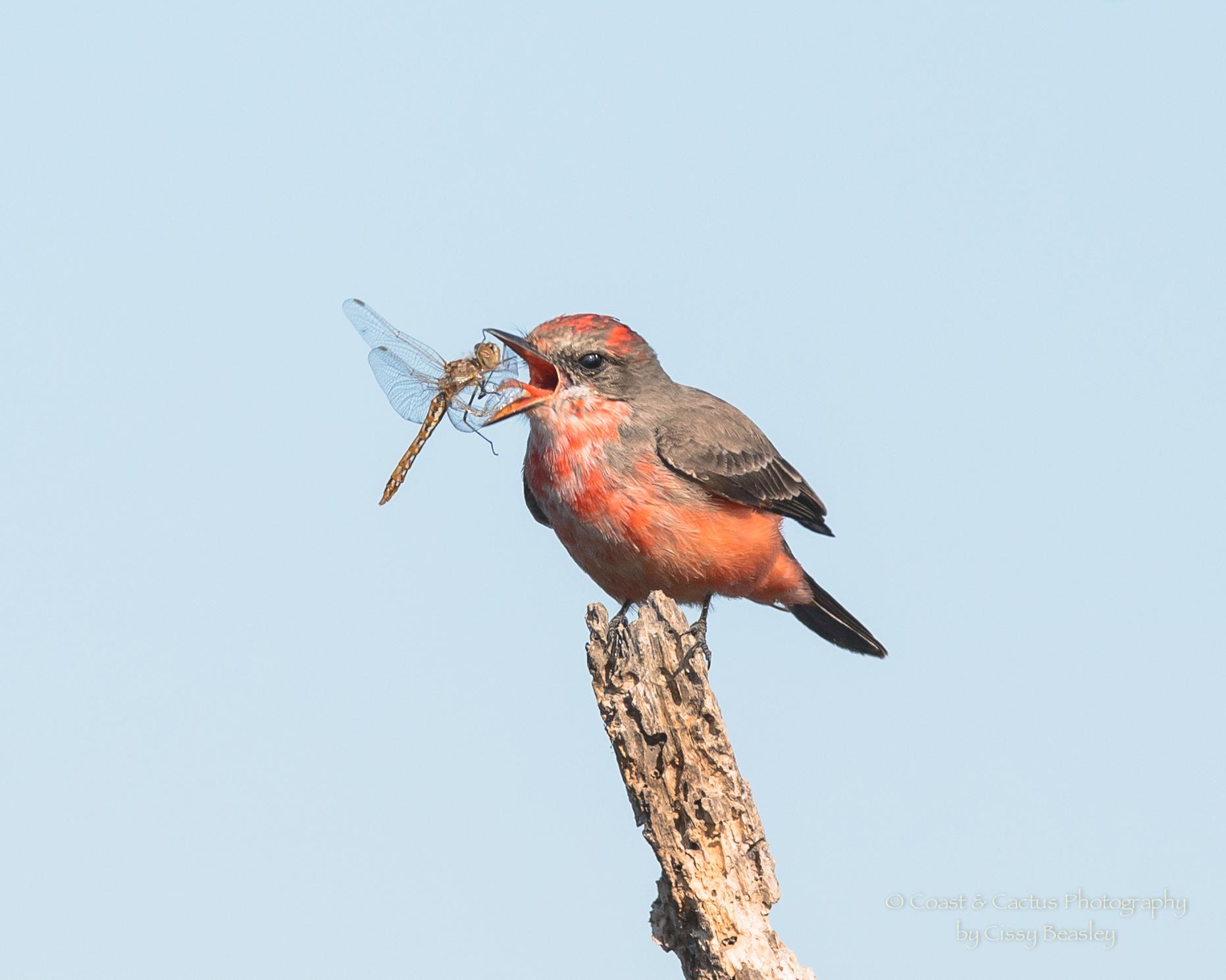 BirdSpotter Photo Contest: Week 11 Winner!   Project ...